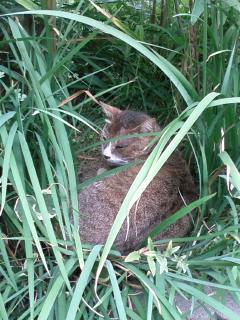 茂みに隠れてるのは?